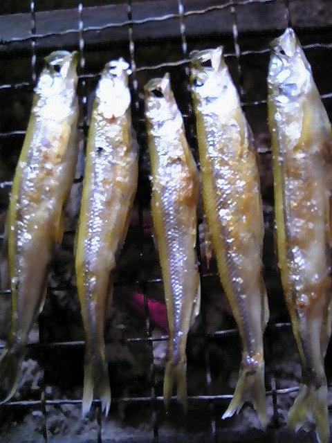 公魚の一夜干し